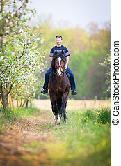 Young man riding a horse around the apple orchard in spring