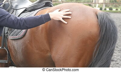 Young man stroking body of brown horse outdoors. Arm of male...