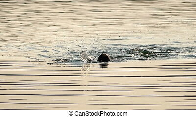 Young Man Swims Backstroke in The Sparkling Black Sea Waters at Sunset in Slo-Mo