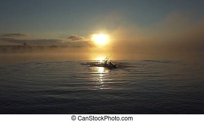 Young man swims craws in a lake at sunset in slo-mo
