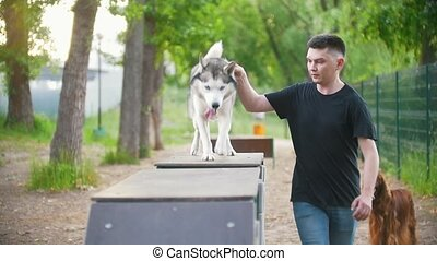 Young man trains husky dog on the overpass on playground in...