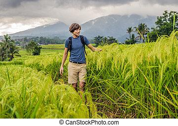 Young man traveler on Beautiful Jatiluwih Rice Terraces ...