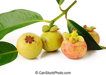 young mangosteen on white