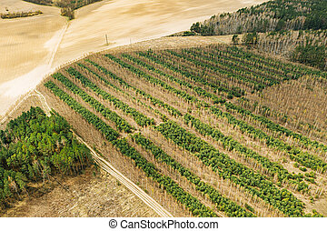 Young Mixed Forest In A Planted Forest Belt. Aerial View Of Forest Strips Landscape In Early Spring Sunny Day. Drone View. Bird's Eye View.