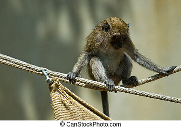 young monkey on a rope