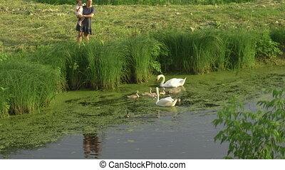 Young mother with her baby girl daughter feeding swan and...