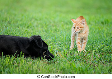 Young orange cat standing on green grass and looking scared at black dog