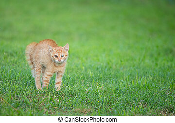 Young orange cat standing on green grass and looking scared