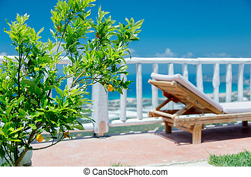 Young orange tree in a hotel with lounger
