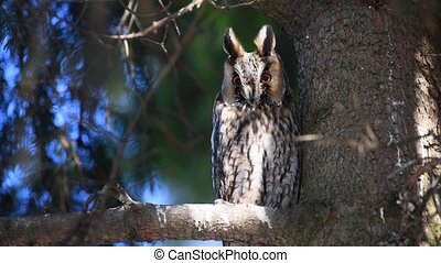 Young Owl sit in a tree and looking on the the camera