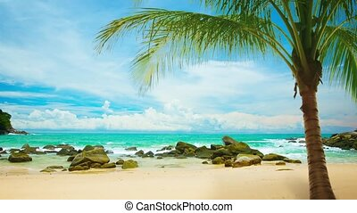 """Young Palm Tree on a Rocky Tropical Beach, with Sound."""