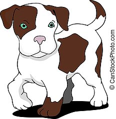 Young pitbull