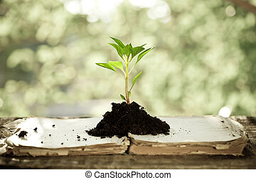 Young plant against natural background - Young plant on old...