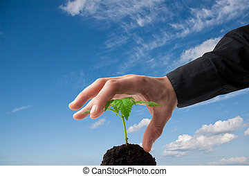 young plant and hand with blue sky
