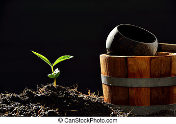 Young plant and watering pot on black background