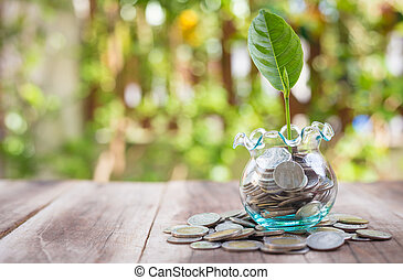 Young plant growing in money jar on wooden plank