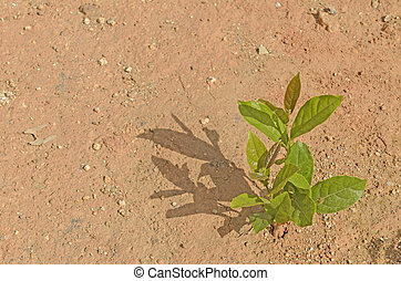 young plant growing on the dry soil