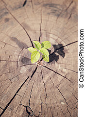 young plant growing on tree stump, hope concept