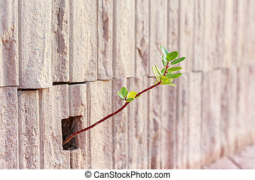 Young plant growing up from stone wall