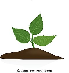 Young plant in dark soil isolated on white background