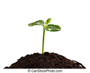 Young plant in earth, concept of new life