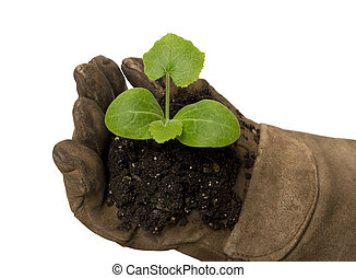 Young Plant In Gloved Hand
