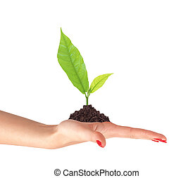 Young plant in ground on woman hand isolated on white background