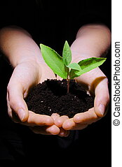 growth - young plant in hand showing concept of youth and...