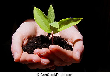 young plant in hand showing concept of youth and growth
