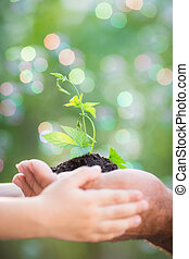 Young plant in hands against green background