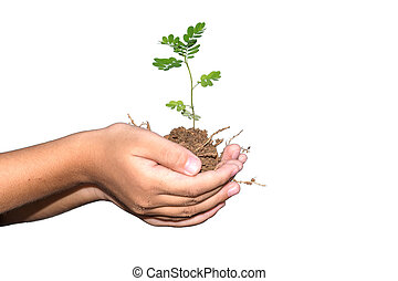 Young plant in hands.