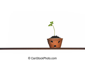 Young plant in pot isolated on the white backgrounds