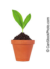 Young plant in pot isolated on white background