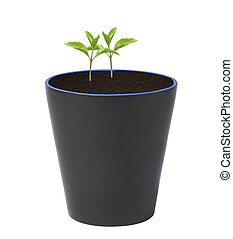 Young plant in pot isolated