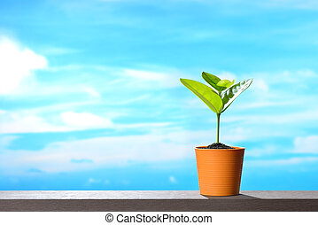 Young plant in pot on sky background