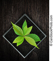 Young plant in pot on wood background