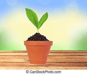 Young plant in pot on wooden table over nature background