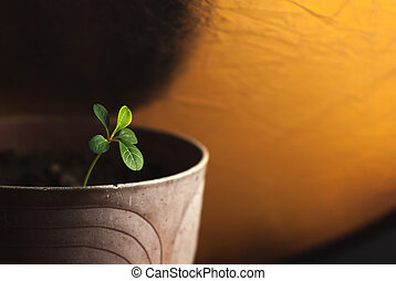 Young plant in pot with earth