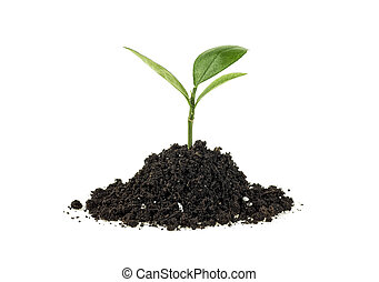 Young plant in soil humus on a white background