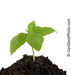 Young plant in the ground, isolated on white background
