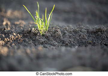 Young plant in the ground