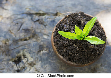 young plant in wooden pot