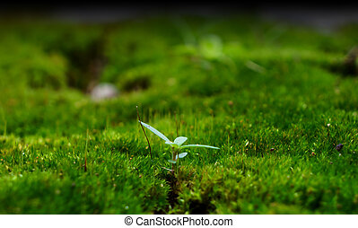 young plant on green grass