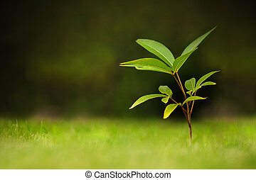Young plant on nature background