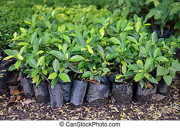 young plants for growing in garden