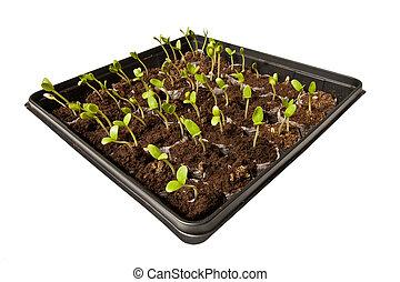 Young Plants Grow Toward The Light