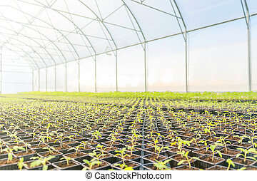 Young plants growing in a greenhouse
