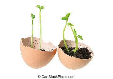 Young Plants in Egg Shells