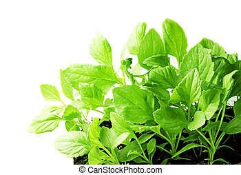 Young plants isolated on white