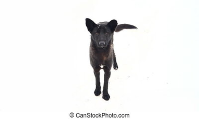 young playful dog - dog on a white background